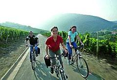 cyklister-i-moseldalen